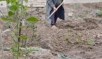تربية الكوفة تقوم بحملة لتأهيل روضة الاصيل